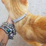 DEWEL™ Pro Guard Flea and Tick Collar for Dogs photo review
