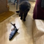 Cat Kicker Fish Toy photo review