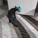 Windmill Cat Toy photo review