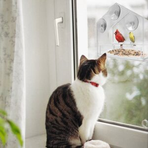 Transparent Suction Cup Bird Feeder