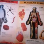 Anatomy of The Human Body 3D Picture Book photo review