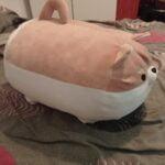Plushie Angry Shiba Pillow (40cm-50cm) photo review
